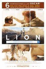 lion_62848